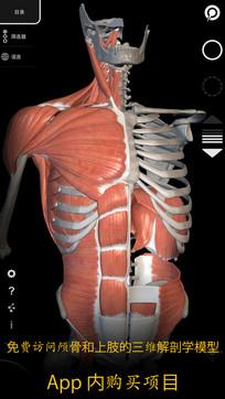 肌肉|骨骼