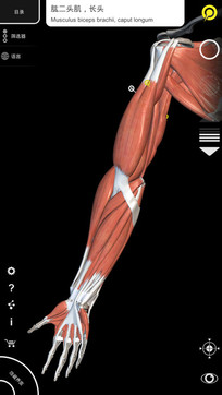 肌肉 骨骼