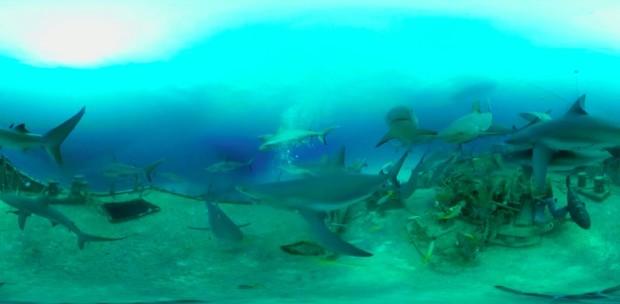 探秘海底鲨鱼VR视频